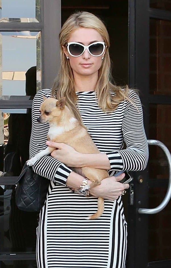 Paris Hilton leaving the office with her chihuahua in beautiful fashion in California